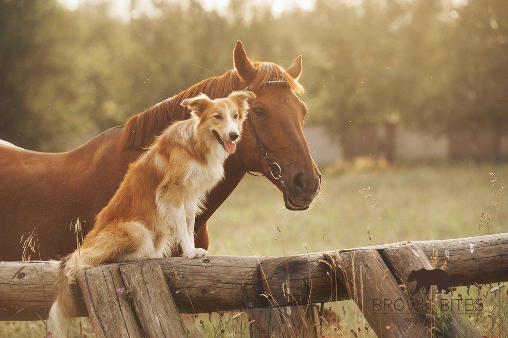 La comida para perros más barata, ecológica y sostenible